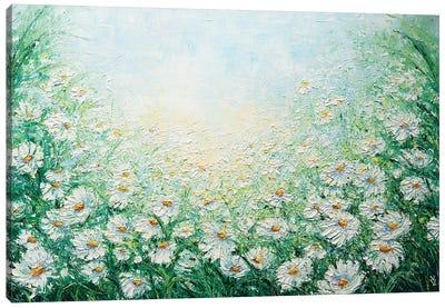Camomile Field Canvas Art Print