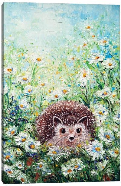 Hedgehog In Daisies Canvas Art Print