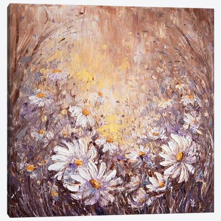 Daisies Canvas Print #VLK8} by Vlada Koval Canvas Print
