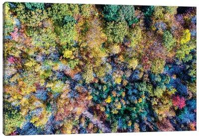 Aerial Fall Trees Canvas Art Print