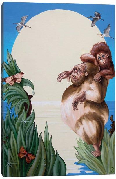 Darwin Canvas Art Print