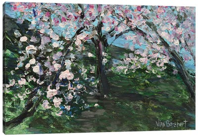 Cherry Blossom Field Canvas Art Print