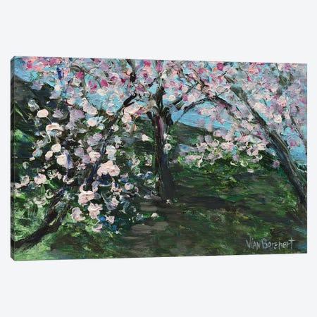 Cherry Blossom Field Canvas Print #VNB13} by Vian Borchert Art Print