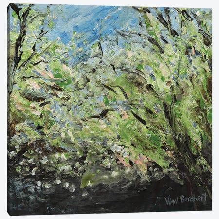 White Green Cherry Blossoms Canvas Print #VNB34} by Vian Borchert Canvas Wall Art