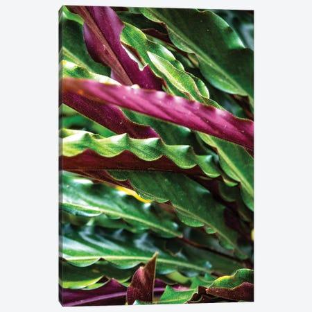 Nature 17 Canvas Print #VNC140} by Alexandre Venancio Canvas Art Print