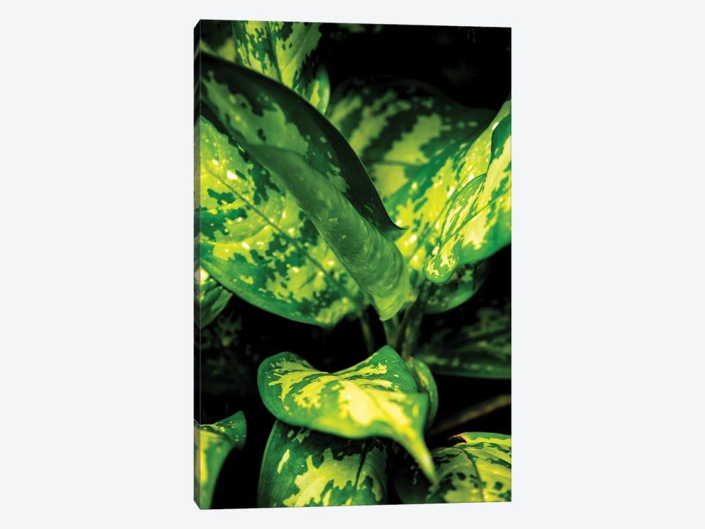 Nature 18 by Alexandre Venancio 1-piece Canvas Print