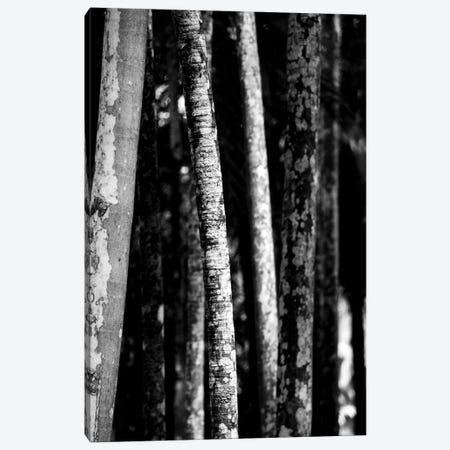 Nature 20 Canvas Print #VNC143} by Alexandre Venancio Canvas Art Print