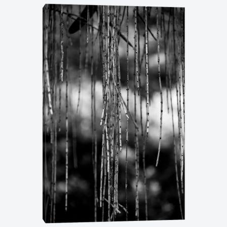 Nature 21 Canvas Print #VNC144} by Alexandre Venancio Canvas Art