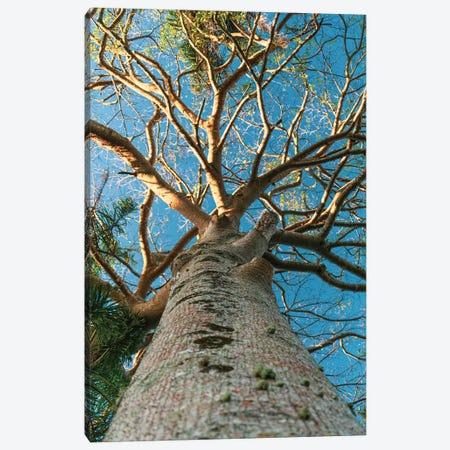 Big Tree Canvas Print #VNC292} by Alexandre Venancio Canvas Art Print