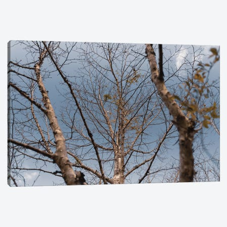 Autumn Trees Canvas Print #VNC295} by Alexandre Venancio Canvas Art