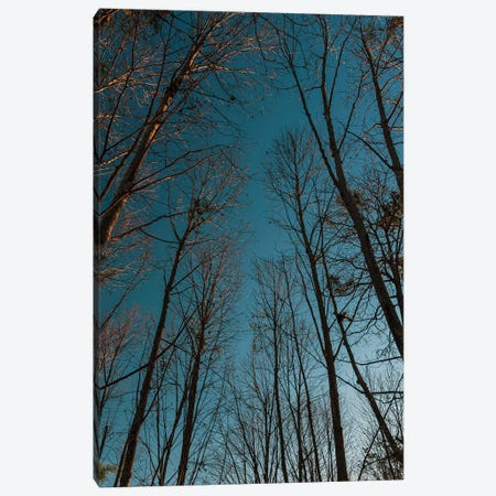 Autumn Path Canvas Print #VNC296} by Alexandre Venancio Canvas Wall Art