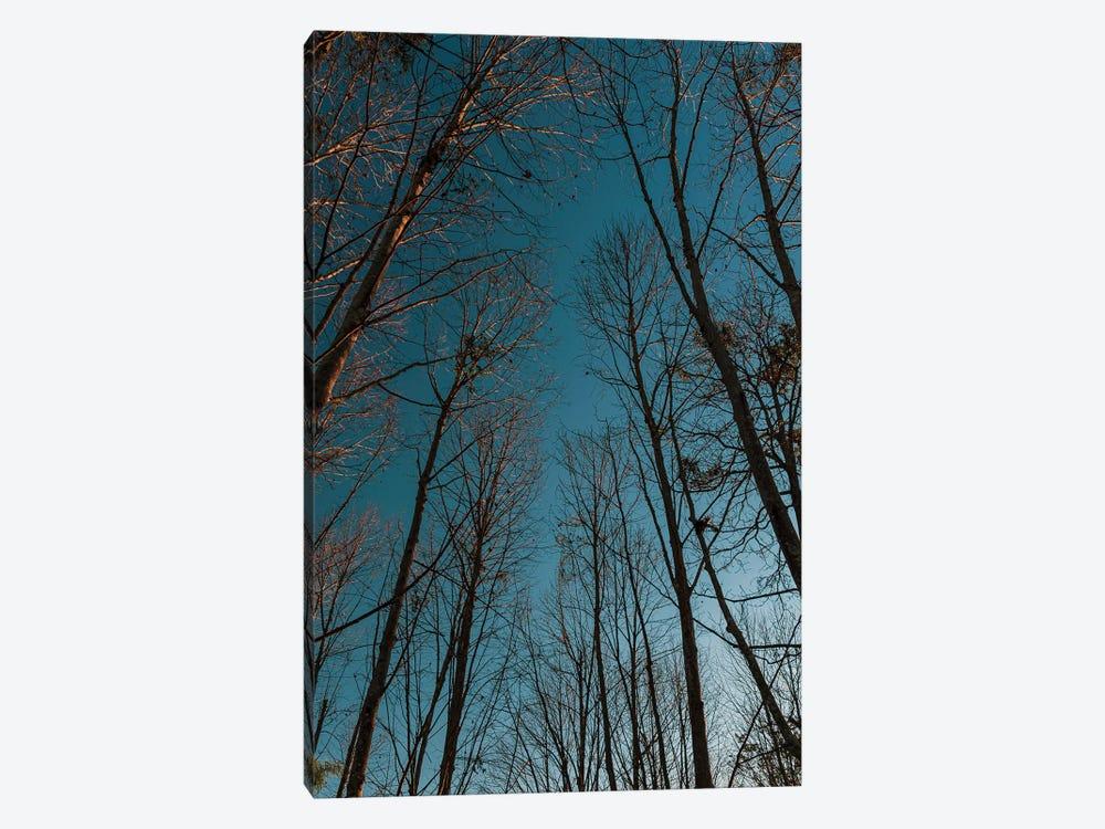 Autumn Path by Alexandre Venancio 1-piece Canvas Art Print