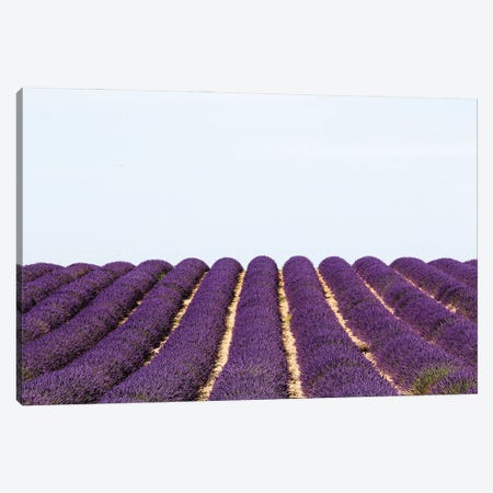 France Provence Lavande Field Pair I Canvas Print #VNC322} by Alexandre Venancio Canvas Print