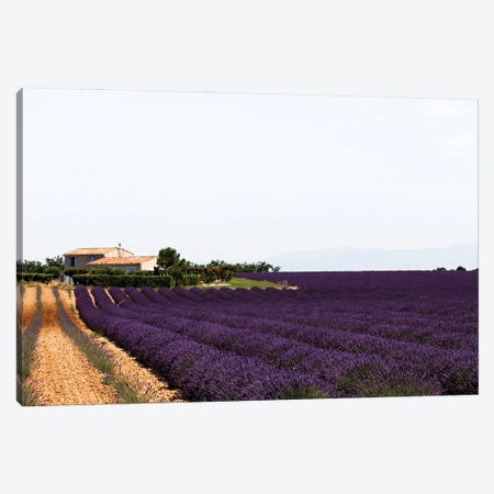 France Provence Lavande Field Pair II Canvas Print #VNC323} by Alexandre Venancio Canvas Print