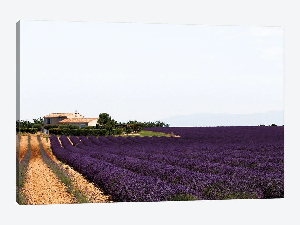 France Provence Lavande Field Pair II by Alexandre Venancio 1-piece Canvas Artwork