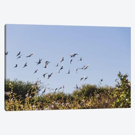 Portugal Birds Canvas Print #VNC393} by Alexandre Venancio Canvas Art