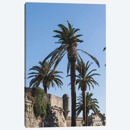 Portugal Cascais Palmtrees Canvas Print #VNC446} by Alexandre Venancio Canvas Print