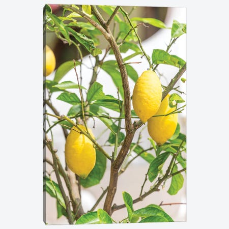 Amalfi Coast Lemons Canvas Print #VNC525} by Alexandre Venancio Canvas Wall Art