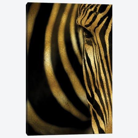 Zebra Canvas Print #VNC75} by Alexandre Venancio Canvas Art Print
