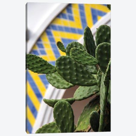 Cactus Canvas Print #VNC97} by Alexandre Venancio Art Print