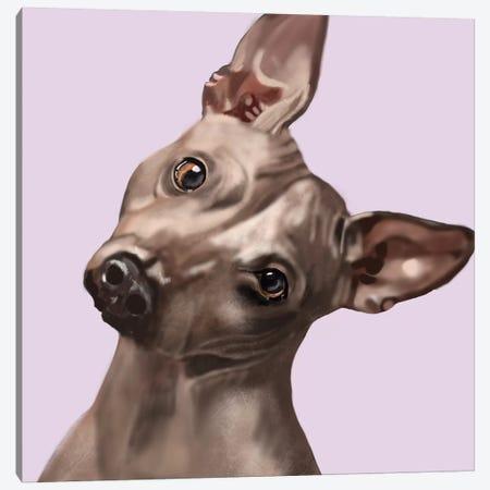 American Hairless Terrier Canvas Print #VNE102} by Vicki Newton Canvas Art Print