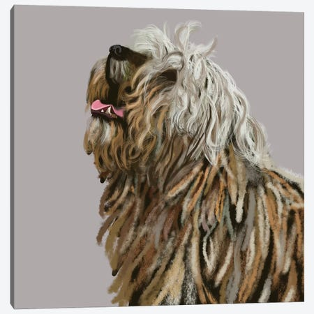 Berger De Bergame Canvas Print #VNE104} by Vicki Newton Canvas Artwork