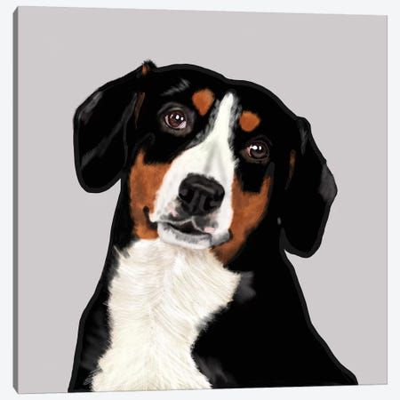 Entelbucher Mountain Dog Canvas Print #VNE109} by Vicki Newton Canvas Art Print