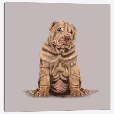 Shar Pei Canvas Print #VNE111} by Vicki Newton Canvas Wall Art