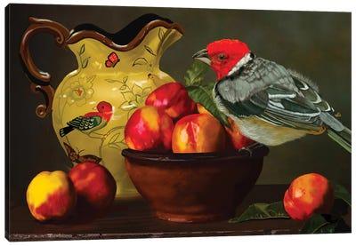 Still Life With Yellow Bill Cardinal Canvas Art Print