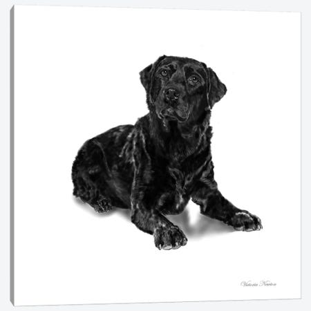 Black Lab Canvas Print #VNE11} by Vicki Newton Canvas Art