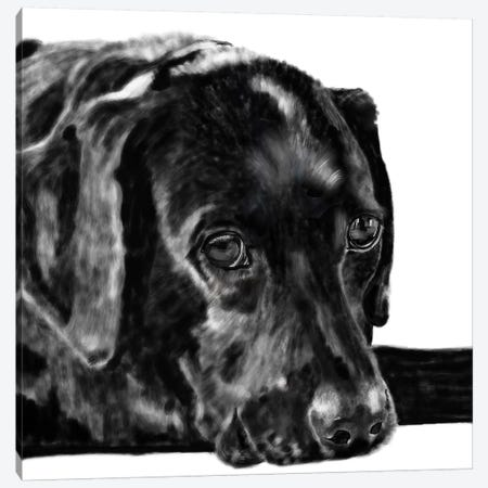 Black Lab Pencil Canvas Print #VNE12} by Vicki Newton Canvas Artwork
