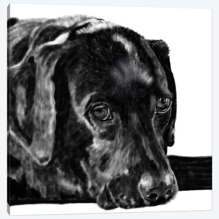 Black Lab Pencil Canvas Print #VNE12} by Vicki Newton Canvas Artwork
