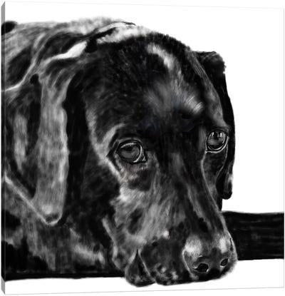 Black Lab Pencil Canvas Art Print
