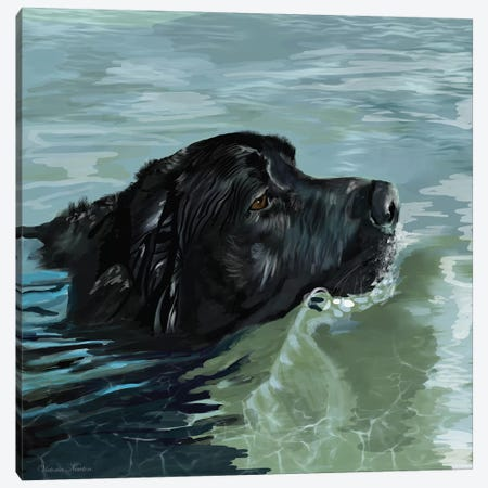 Black Lab Swimming Canvas Print #VNE13} by Vicki Newton Canvas Art