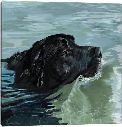Black Lab Swimming Canvas Art Print
