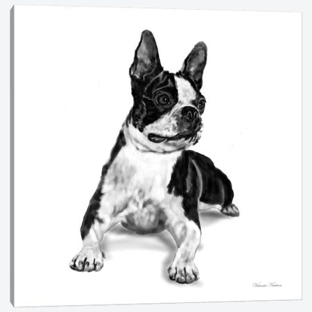 Boston Terrier Canvas Print #VNE15} by Vicki Newton Canvas Art Print