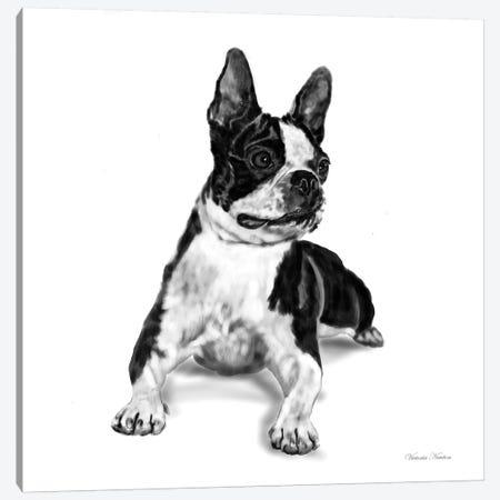 Boston Terrier Canvas Print #VNE15} by Vicki Newton Canvas Art Print