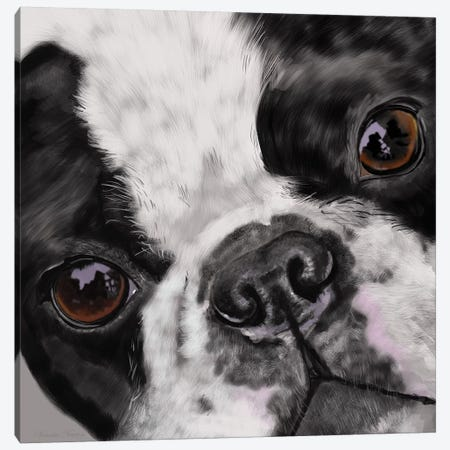 Boston Terrier Close Up Canvas Print #VNE16} by Vicki Newton Canvas Print