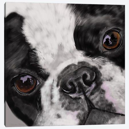 Boston Terrier Close Up Canvas Print #VNE16} by Vicki Newton Canvas Print