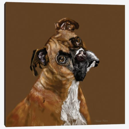 Boxer Portrait Canvas Print #VNE17} by Vicki Newton Canvas Art Print