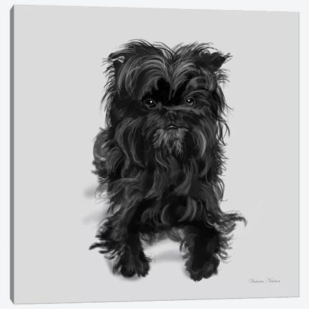 Affenpinscher Canvas Print #VNE1} by Vicki Newton Art Print