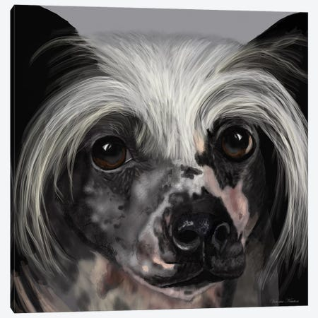 Chinese Crested Canvas Print #VNE25} by Vicki Newton Canvas Artwork