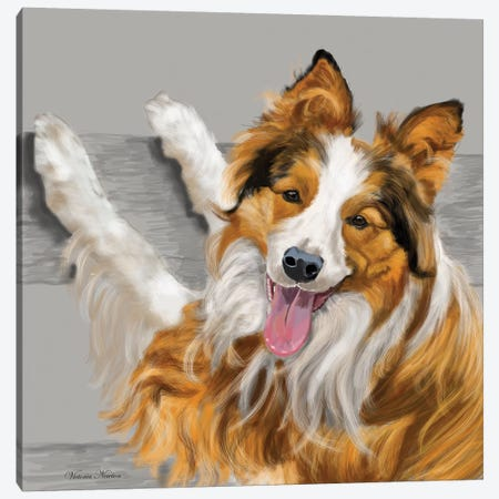 Collie Canvas Print #VNE28} by Vicki Newton Canvas Print