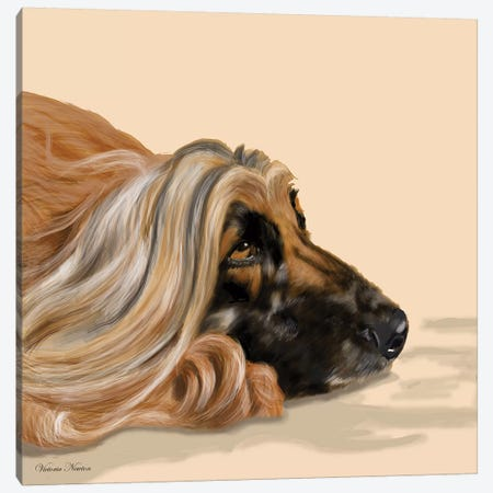 Afghan Hound 3-Piece Canvas #VNE2} by Vicki Newton Art Print