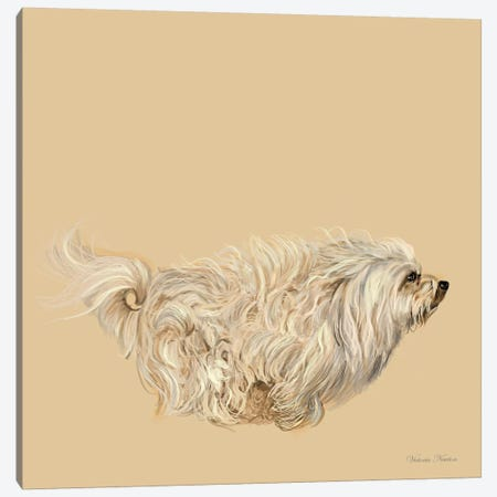 Havanese Canvas Print #VNE40} by Vicki Newton Art Print