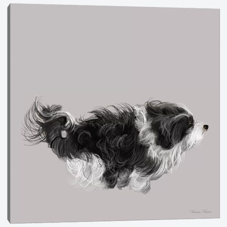 Havanese In  Black & White Canvas Print #VNE41} by Vicki Newton Art Print