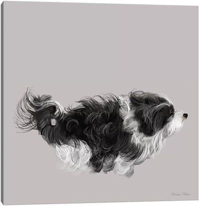 Havanese In  Black & White Canvas Art Print