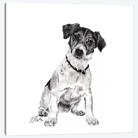 Jack Russell In Black & White Canvas Print #VNE43} by Vicki Newton Canvas Print