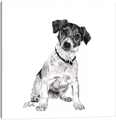 Jack Russell In Black & White Canvas Art Print