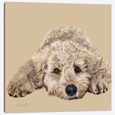 Labradoodle Canvas Print #VNE50} by Vicki Newton Canvas Art
